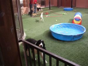 Kate at Pal's Inn Pet Resort